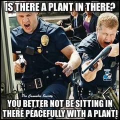 You better not be sitting in there peacefully with a plant